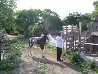 Gaucho chileno