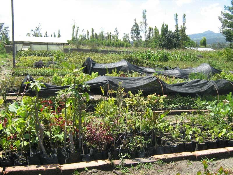 Knollen- und Gemüseanbau Ecuador