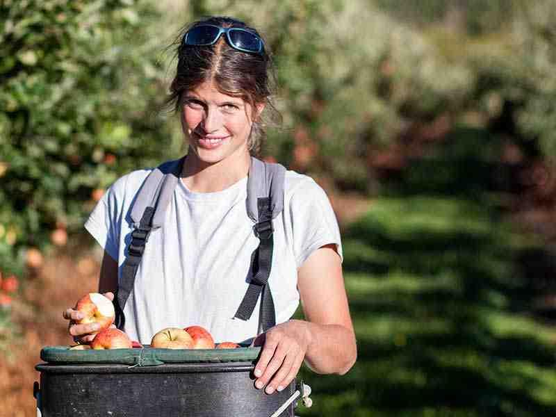 Farmstay in Neuseeland