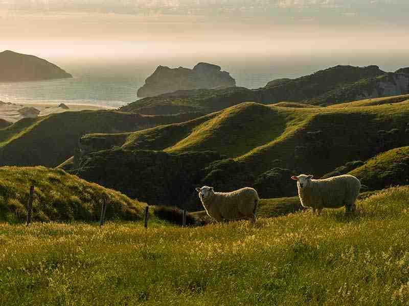 Farmland Neuseeland