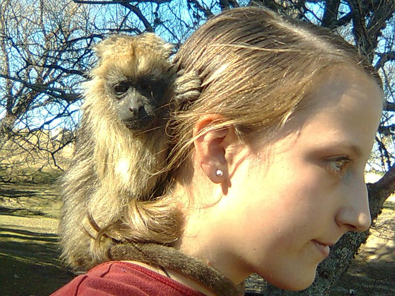 Volunteer with baby monkey