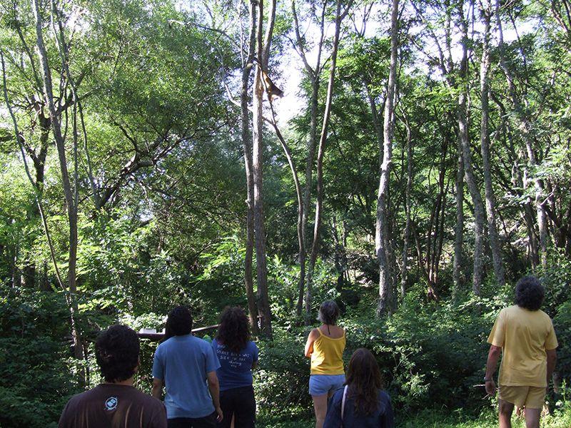 Waldabschnitt mit Affen