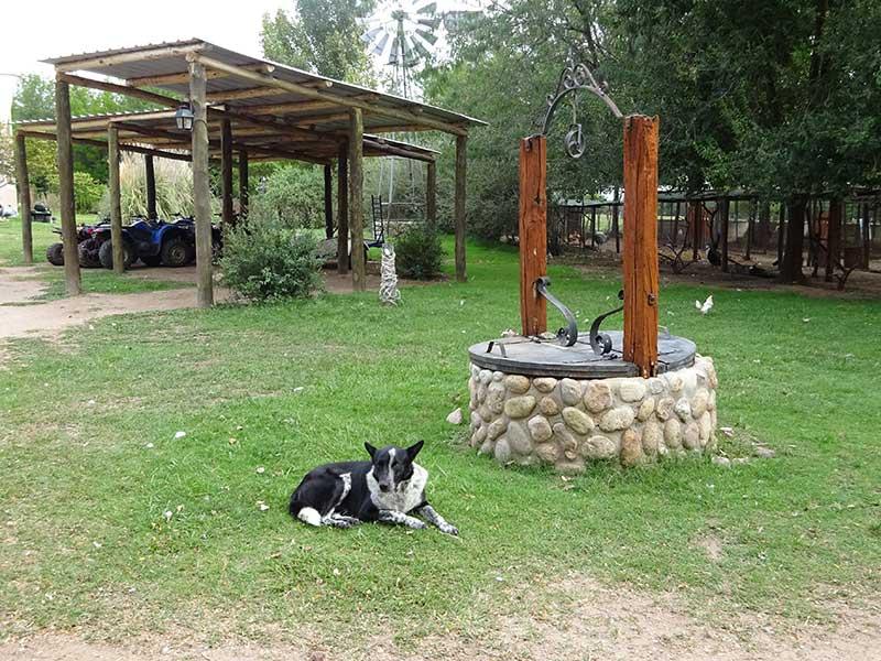Hund beim Brunnen