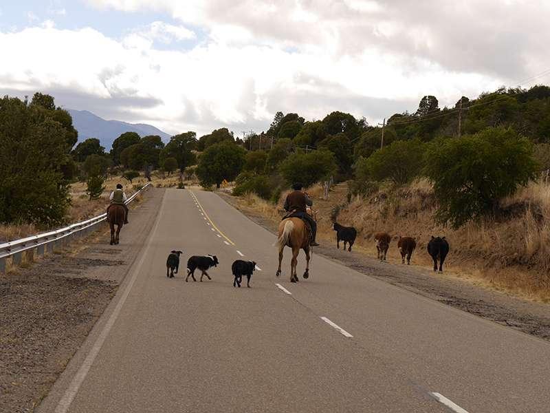Viehtrieb in Patagonien