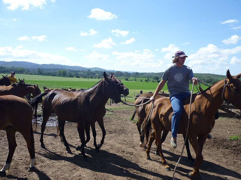 Pferde trainieren auf Poloranch