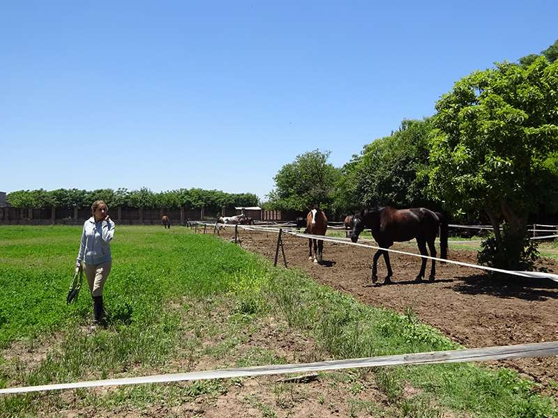 Pferdezuchtanlage