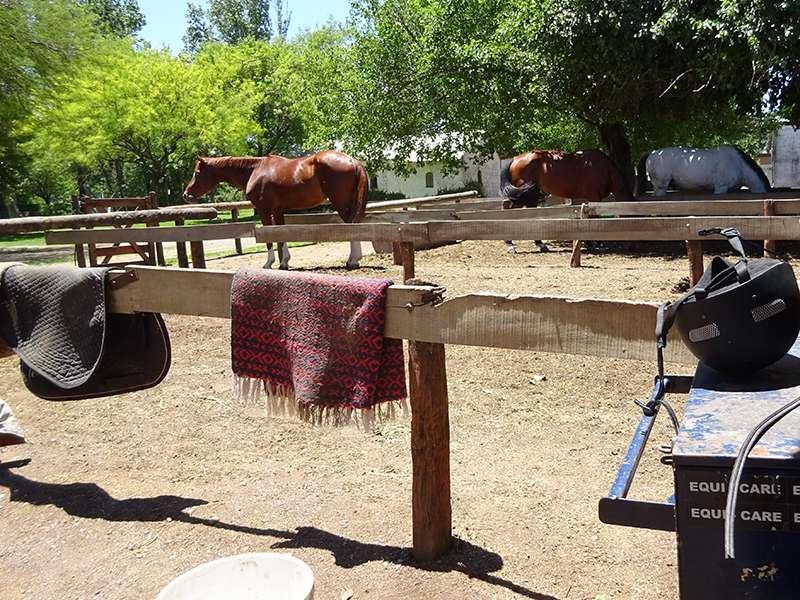 Koppel Pferdeclub Argentinien