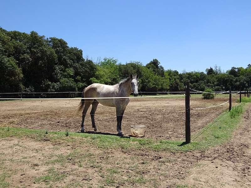 Pferd in der Koppel
