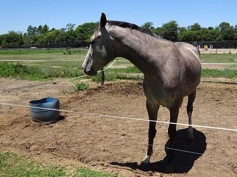 Reitclub Pferd