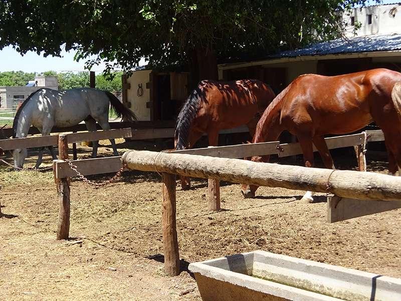 Reit- und Pferdeclub Córdoba Argentinien