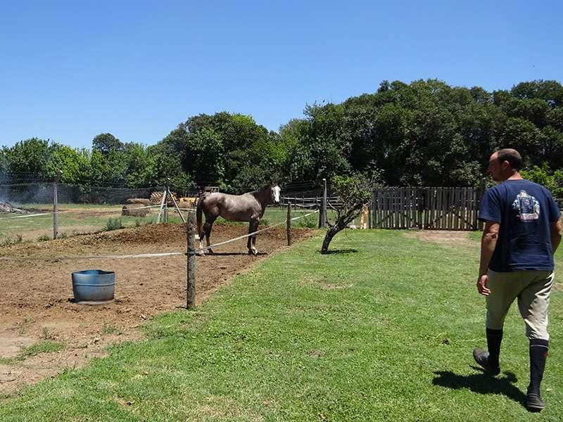 Pferdehof bei Córdoba Argentina