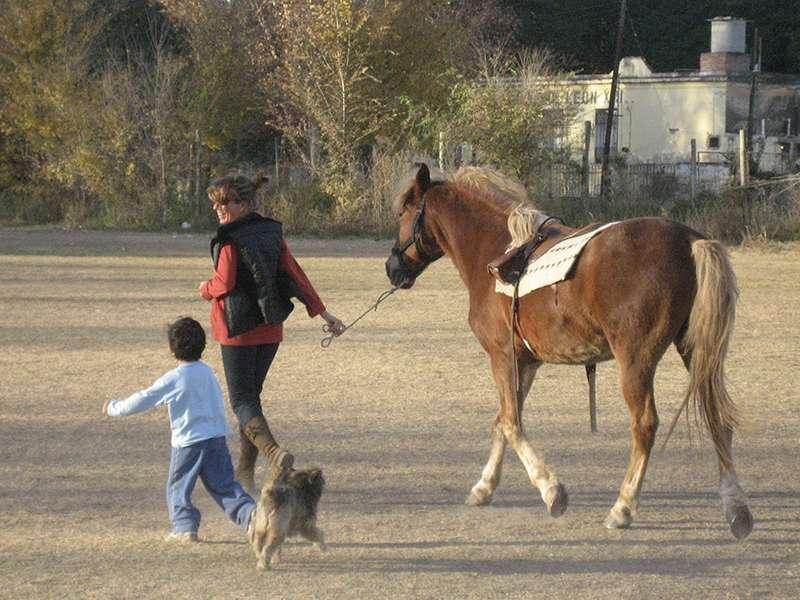 Therapiepferd Therapeut Kind und Hund