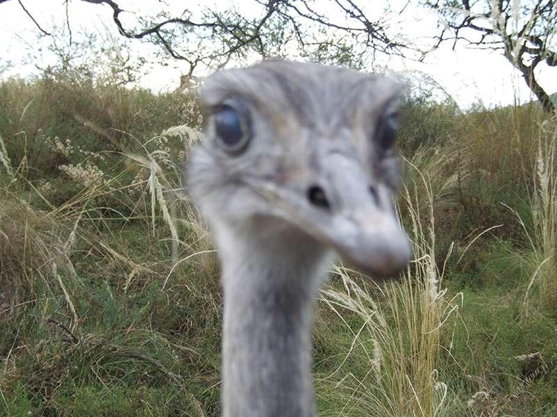 Emu Strauss Tierpark