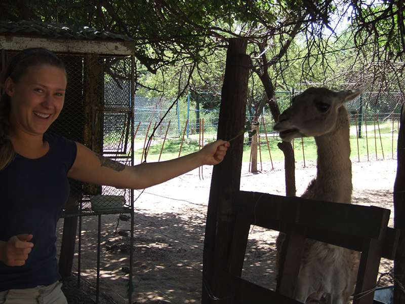 Lama auf dem Tierpark