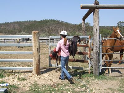 Horse and riding training