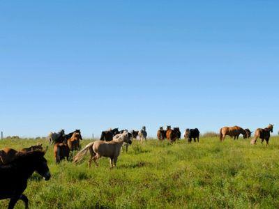 Horses at Ranch in Manitoba