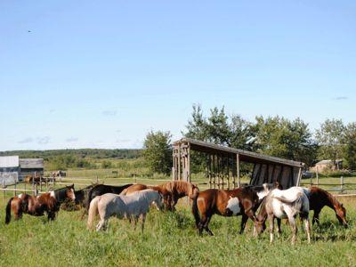 Horse Ranch Manitoba Canada