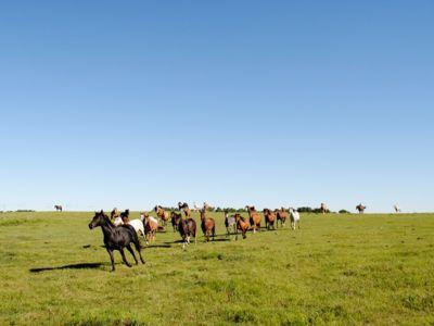 Pferdetrieb in der Prärie