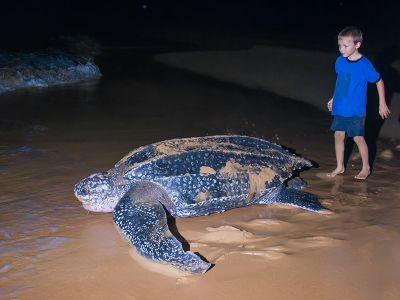 Mega Turtle Costa Rica