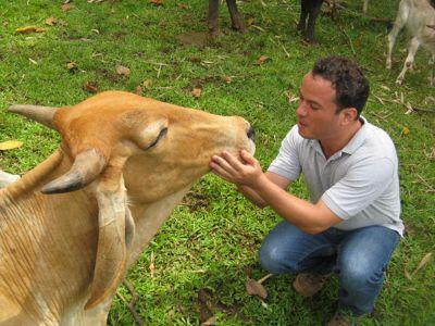 Volunteer with buffalo in Costa Rica