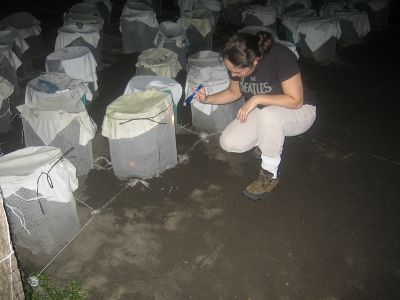 Night watch at beach for turtles in Costa Rica