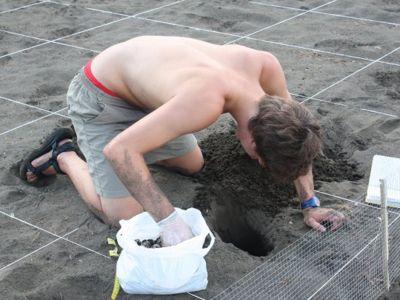 Volunteer digging for turtles in Costa Rica