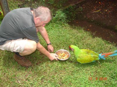Feeding Ara Costa Rica