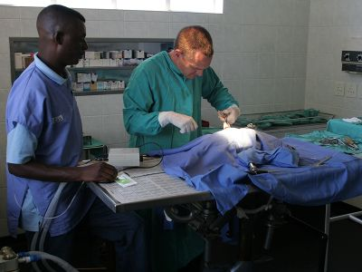 Vet operation in Cape Town South Africa