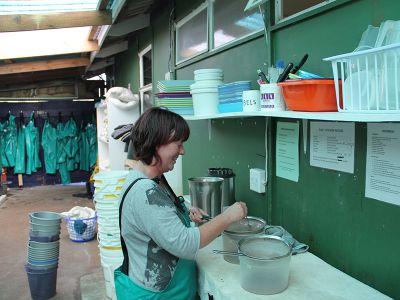 Volunteer at Penguin Rescue Center
