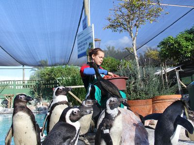 Feeding the penguins at rescue center
