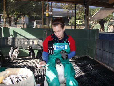 Help the african penguin