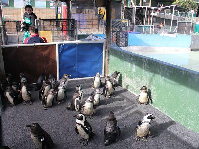 Penguin Rescue Centre in Cape Town