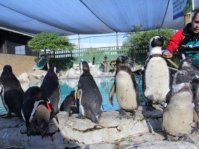 Wildlife penguin rehabilitation center Cape Town