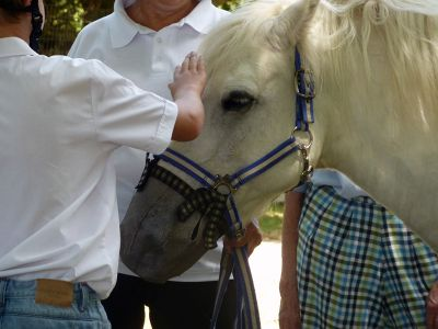 Child pets horse
