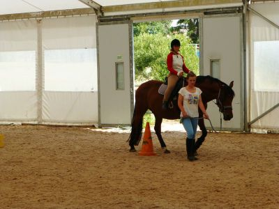Equine therapy center indoor Cape Town