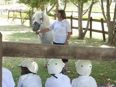 Equine Therapy live instructions