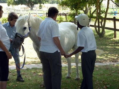 Horse therapist with patient