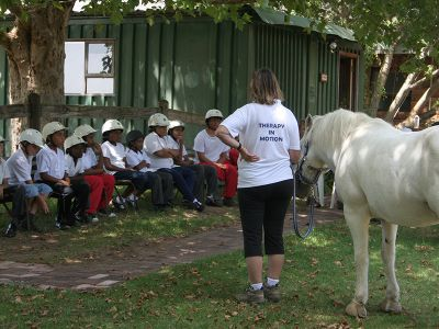 Instructions equine therapy Cape Town