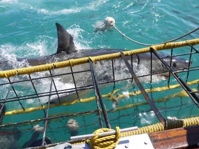 Shark cage South Africa