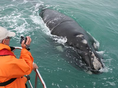 Volunteer takes pictures of whale in South Africa