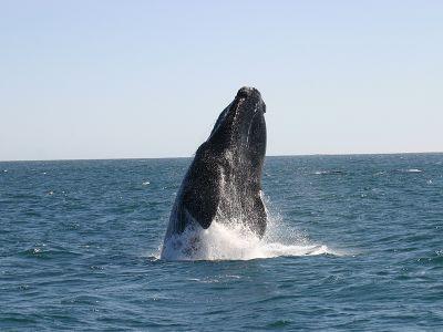 Whale dives up