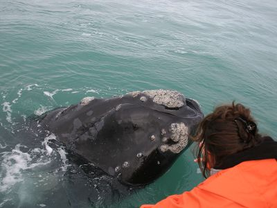 Volunteer almost touchs whale