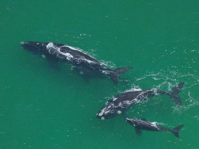Whale family South Africa