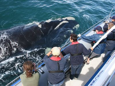 Whalewatching waters South Africa