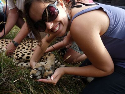 Doped Cheetah South Africa