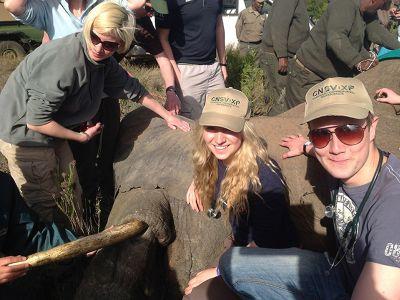 Little Elephant South Africa
