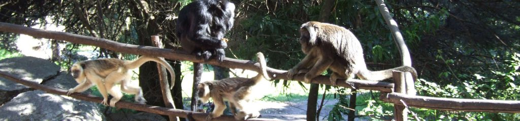 Argentinien Affen Howler Volunteering