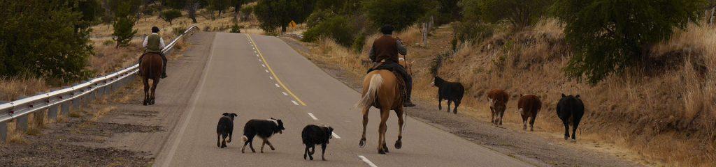 Farmstay Argentinien Gauchos Viehtrieb Pferd Rinder