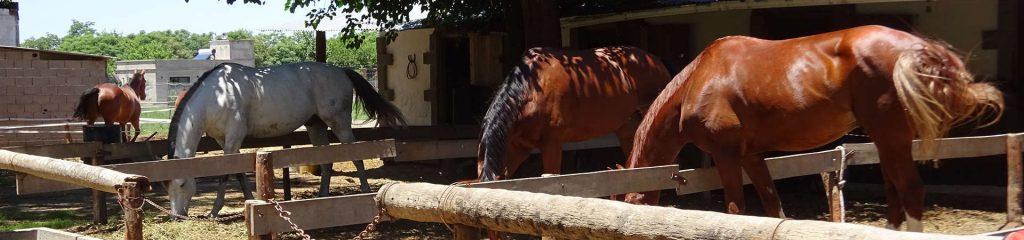 Argentinien Reitclub Córdoba Pferde
