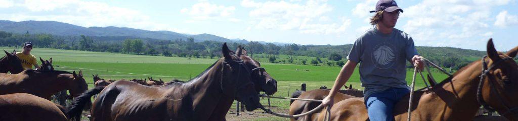 Argentinien Polofarm Polopferde bewegen